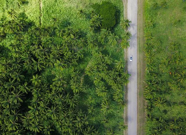 car driving in forest above view